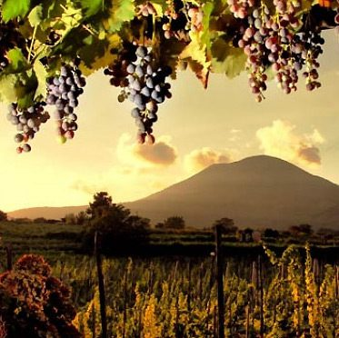 Wine tours from Sorrento
