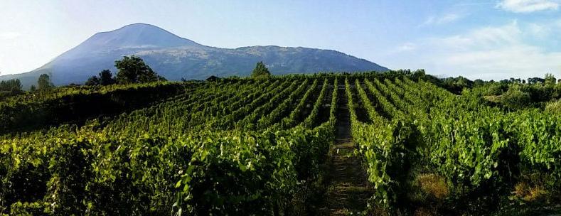 Sorrentino Vino