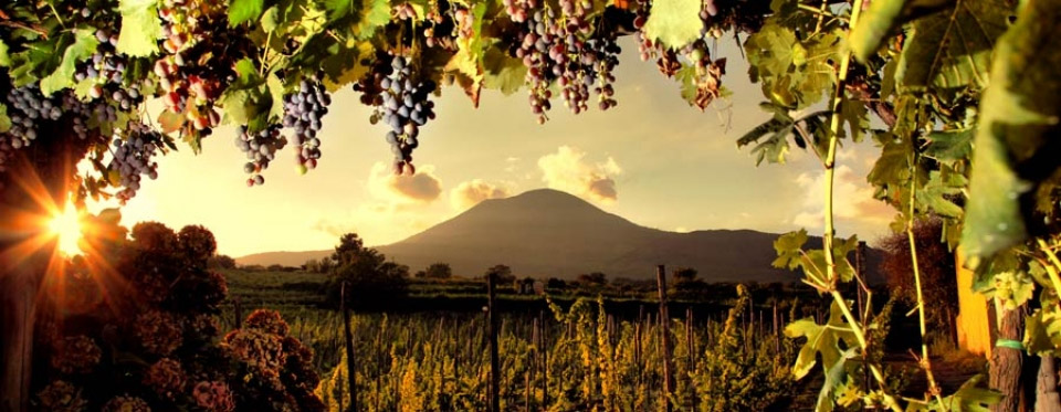 Sorrento wine tours and tasting