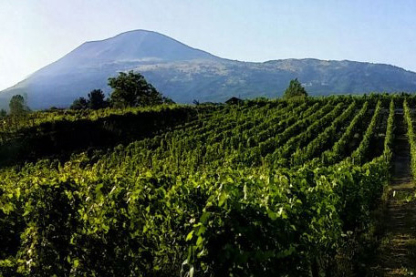Pompeii wine tasting tours from Sorrento
