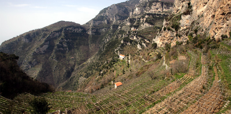 mountain wine terraces