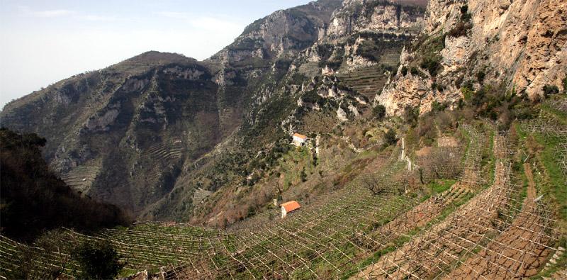 mountain wine terraces